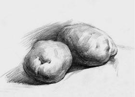 土豆素描画法(一)