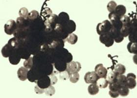 葡萄的勾线和水墨技法