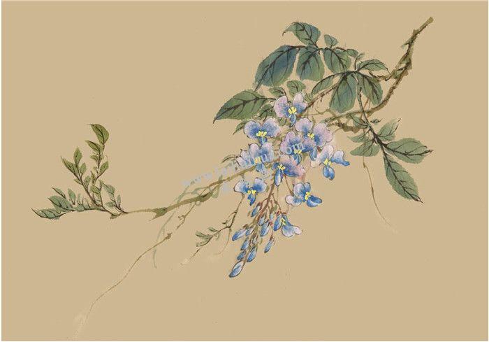 紫藤的国画画法 步骤八
