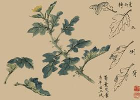 菊花的国画画法