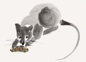 老鼠的国画画法步骤