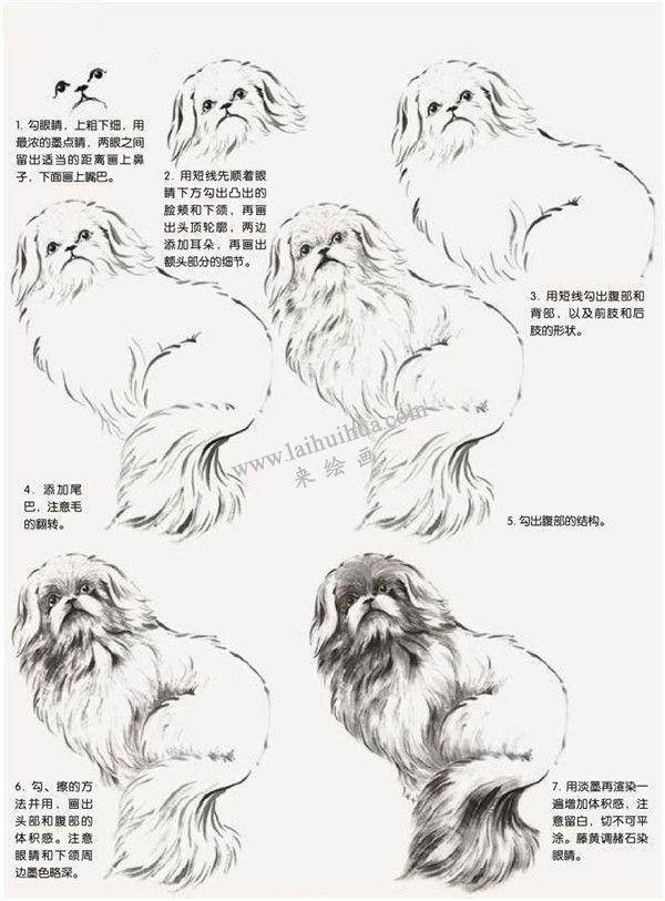哈巴狗的国画画法步骤