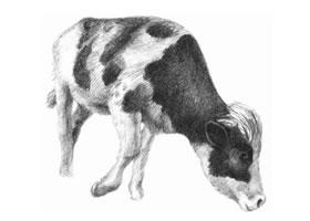 奶牛的素描画法步骤