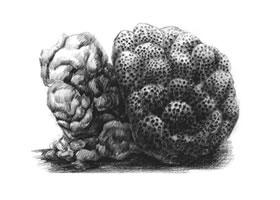 珊瑚的素描画法步骤