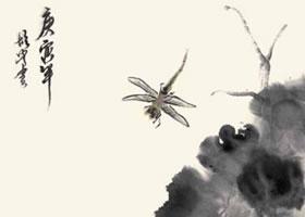 荷花与蜻蜓的国画画法
