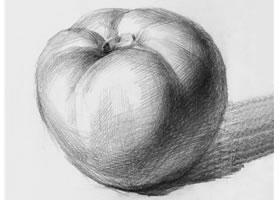 西红柿素描画法(一)