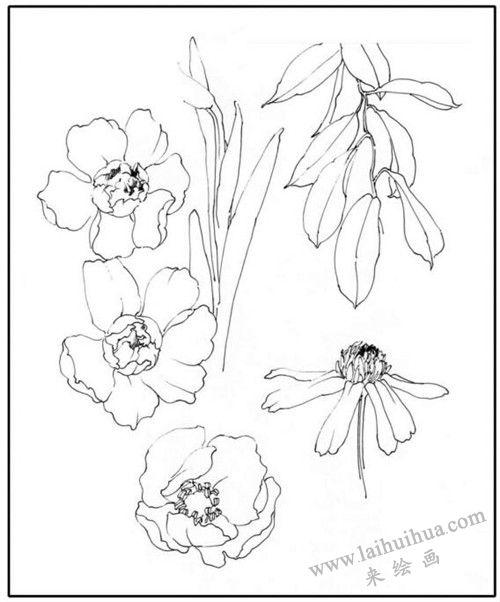 花卉素描基本形态的训练