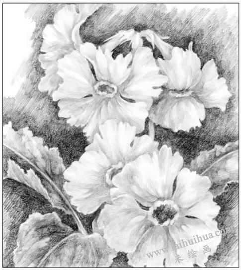 花卉素描对比的调节