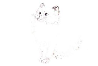 白猫写意画画法步骤二