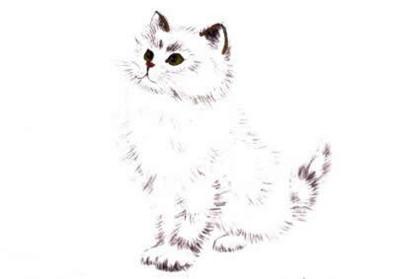 白猫写意画画法步骤三