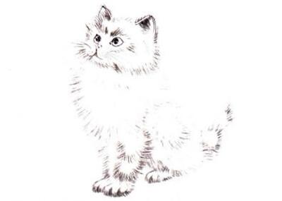白猫写意画画法步骤四