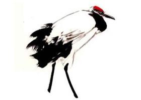 丹顶鹤的画法