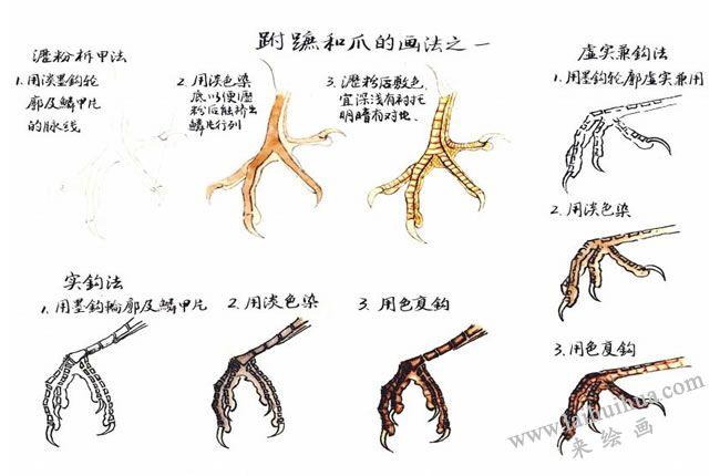 禽鸟的工笔鸟脚的画法01