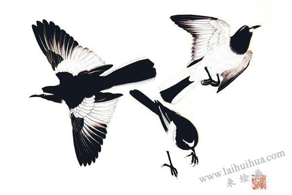 鹡鸽鸟的画法