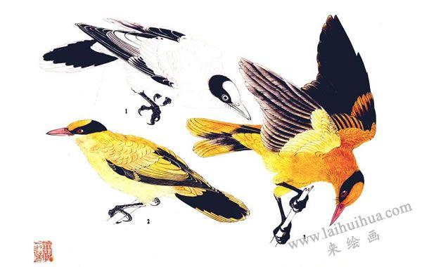 工笔画黄莺的画法