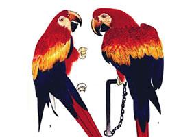 红色鹦鹉的画法