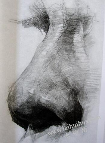 素描中鼻子的画法02