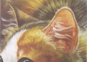 猫耳的油画画法