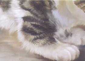 猫足的油画画法