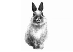 兔子的素描画法