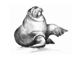 海象的素描画法