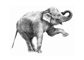 大象的素描画法