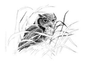 猫头鹰素描画法