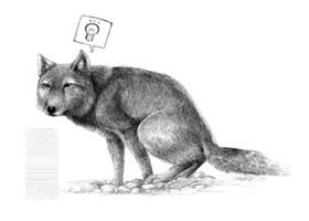 藏狐的素描画法