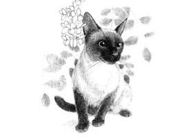 暹罗猫的素描画法