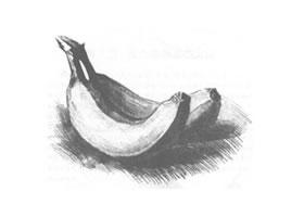 香蕉素描画法(一)