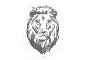 狮子头部素描