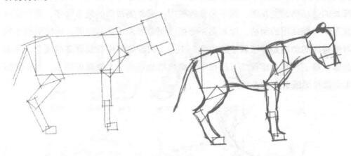 动物体形素描02