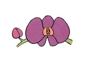 蝴蝶兰儿童画