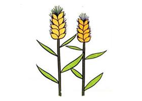 小麦儿童画