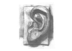 石膏耳朵素描