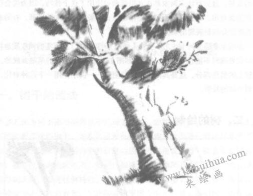 树的素描画法