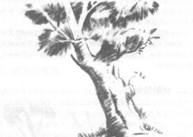 树的素描绘制