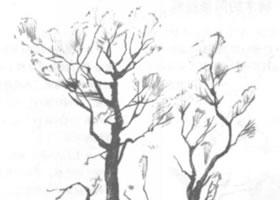 树木的铅笔素描画法