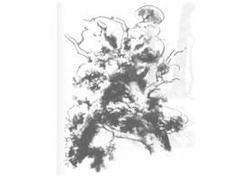树木风景素描绘制方法