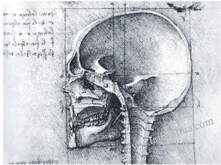 人物头部解剖结构