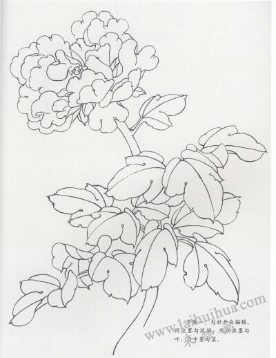 工笔牡丹画法步骤01