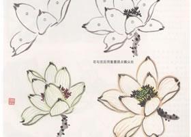 花卉国画荷花的画法