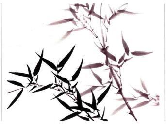 竹子的画法03
