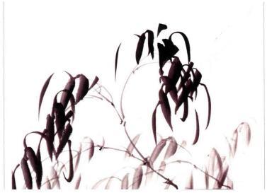 竹子的画法05