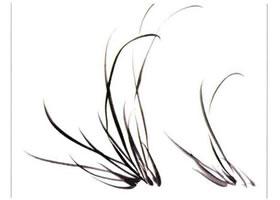 国画兰花:多丛兰叶的画法