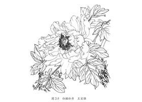 白描花卉的临摹方法及步骤