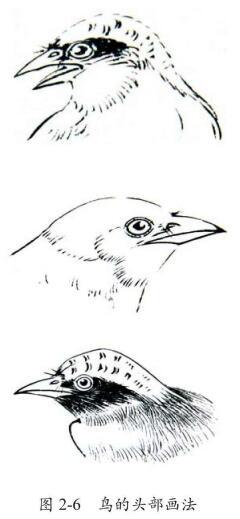 鸟的头部画法,白描