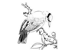 白描禽鸟的临摹方法及步骤