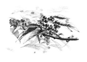 果园植物素描画法