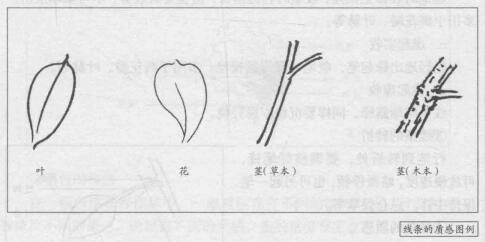 花卉的白描画法:线条的质感图例
